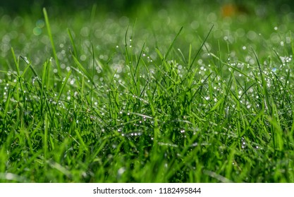 green juicy grass and water droplets