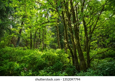 Green juicy mountain forest in the Harz mountains