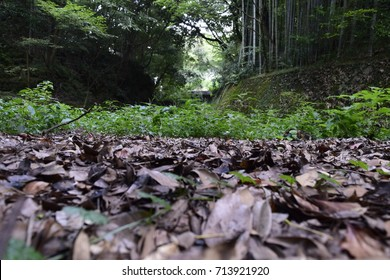 Green Jungle with dead leaves on the ground