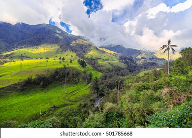 green jungle in mountains, palm trees in cocora valley, colombia, latin america