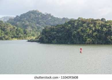 Green jungle of the Panama Canal.
