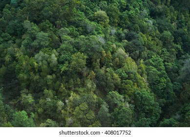Green jungle trees forest aerial treetop view  sustainable conservation