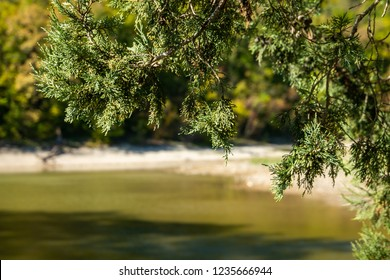 Green juniper needles close-up over the blurred emerald water of a lake in Sukko. Natural beauty of the resort near Anapa. Nature concept for design