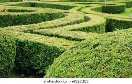 Green labyrinth garden as a part of landscape design concept.