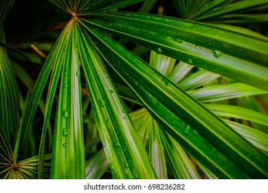 Green lady palm pattern background with water drops