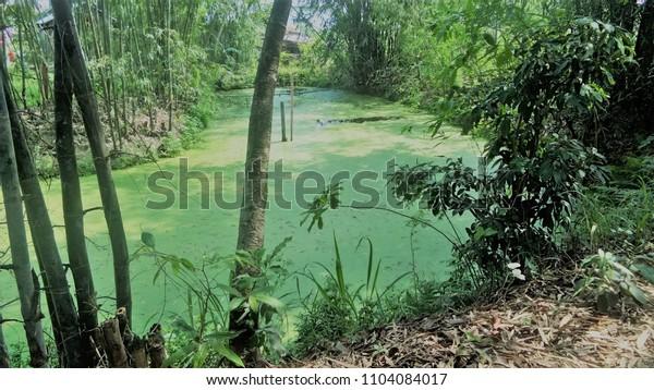 Green lake near home
