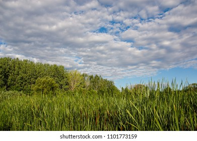 Green lakeside reeds landscape with cloudy summer sky