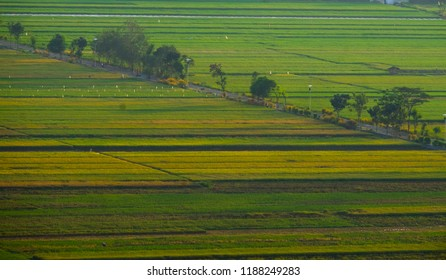 green land and rice field lines