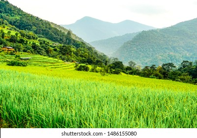 Green landscape in eastern Bhutan. Terrace agriculture for rice fields with mountains in the background.