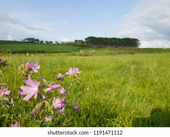 Green landscape with flowers and blue sky