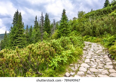 Green landscape with mountain trail in wilderness, road with stones leading through thicket of pine and fir trees in highlands