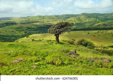 Green Landscape near Salalah, Oman
