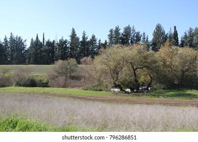green landscape view
