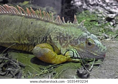Green Large Reptile Terrarium Stock Photo Edit Now 1035493234