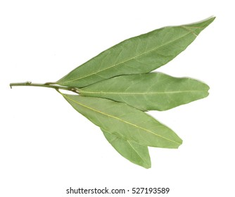 green laurel leaves on a white background