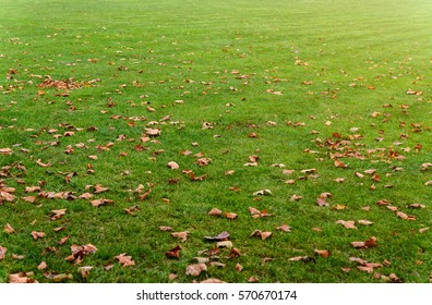 Green lawn with autumn leaves