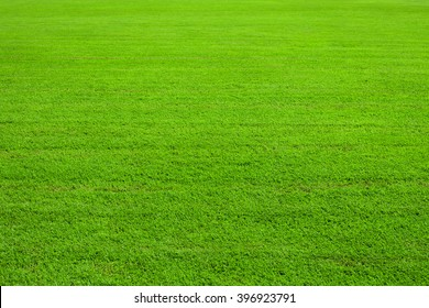 green lawn, background