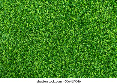 Green lawn for background. Green grass background texture.  top view.