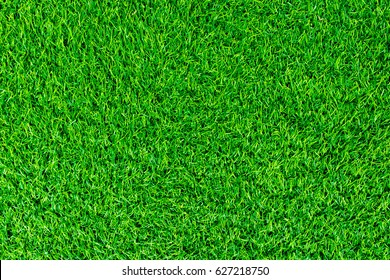 Green lawn for background. Green grass background texture.  (top view)
