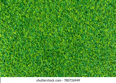 Green lawn for background. Green grass texture background.  top view.