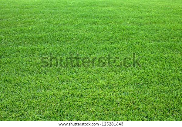 Grüner Rasenhintergrund.Naturhintergrund. Grüne Grasstruktur. Frühlingsmarschteppich