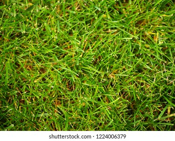 Green lawn background texture photo