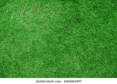 Green lawn for background. top view.