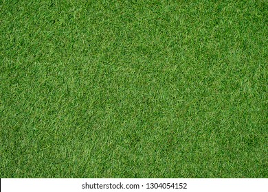 Green lawn for background.Green grass background. texture. top view.