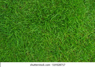 Green lawn, Backyard for background, Grass texture.