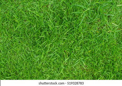 Green lawn, Backyard for background, Grass texture, Design for the background.