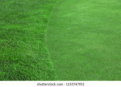 A green lawn with beveled and not mowed grass, a golf course close-up field.