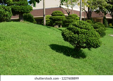 green lawn with city skyline in bangkok. Green grass field in park at city center with blue sky.Autumn beauty of the city park
