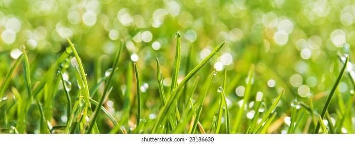 Green lawn with dew drops
