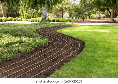 Green lawn and drip irrigation for flowers and plants