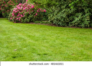 Green lawn and flowering shrubs in a landscaped garden