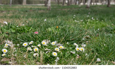 green lawn with flowers sprouting ground