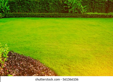 Green lawn, The front lawn for background, Garden landscape design.