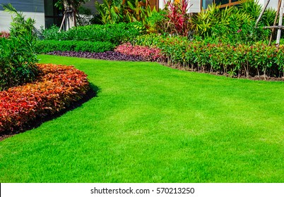 Green Lawn, The Front Lawn For Background, Garden Landscape Design, Design  For The