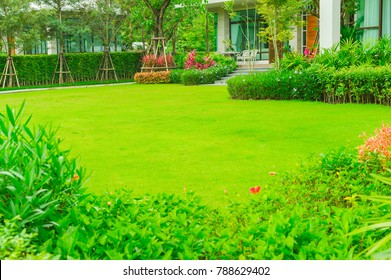 Green lawn, the lawn in front of the house for the background., Landscape formal, front yard is beautifully designed garden.