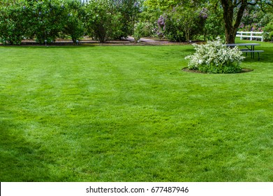 Green lawn and garden with trees
