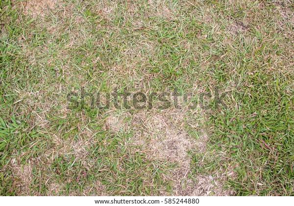 green lawn grass texture background