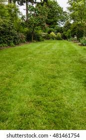 Green lawn growing in a landscaped garden