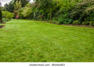 Green lawn growing in a landscaped garden