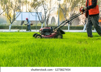 green lawn with hay mover