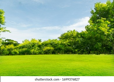 Green lawn with large courtyard, the morning sun