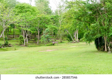 Green lawn and natural tree in garden