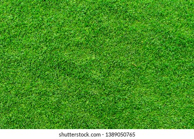 Green lawn on background and texture.
