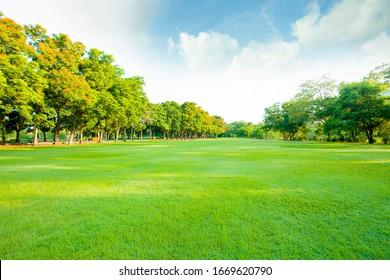green lawn in open public park