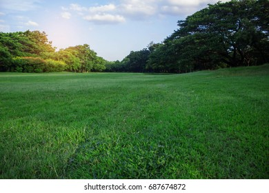 Green lawn with refreshing in the garden.