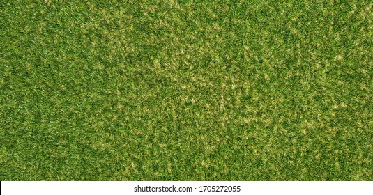 the green lawn of spring